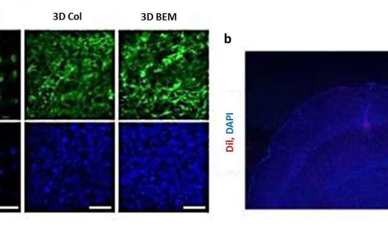 Neuroengineering in Three-dimensional Brain-like Microenvironments