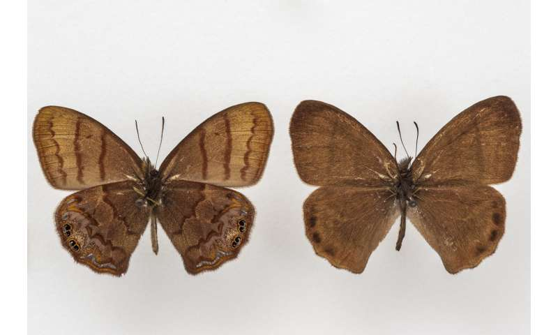 New butterfly species discovered nearly 60 years after it was first collected