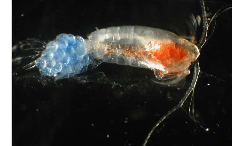 Scientists are using DNA to study ocean life and reveal the hidden diversity of zooplankton