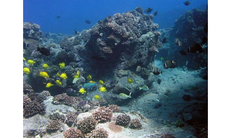 Study highlights opportunity to restore abundance to Hawaiian reef fisheries