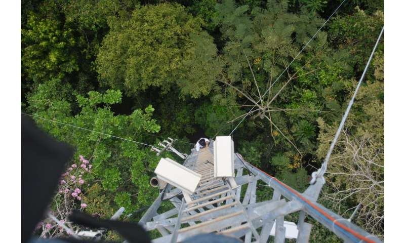 Tropical treetops are warming, putting sensitive species at risk