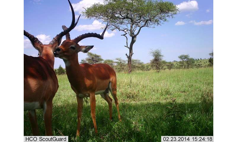 Researchers use artificial intelligence to identify, count, describe wild animals