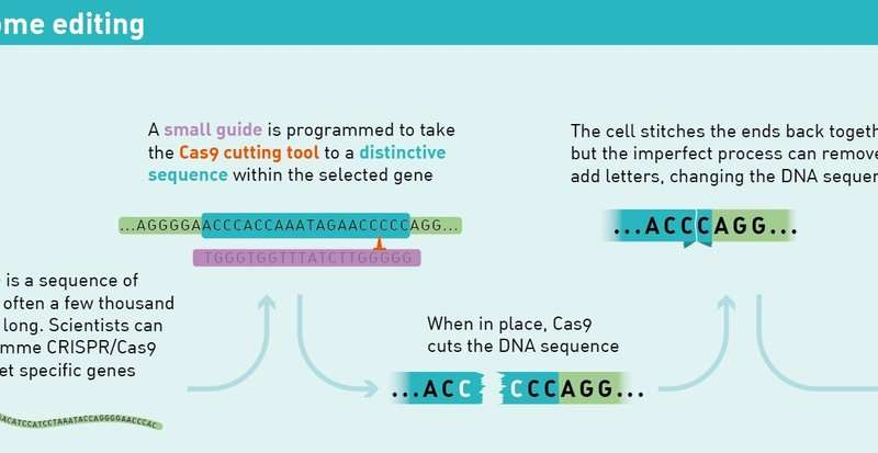 Scientists crack the CRISPR code for precise human genome
