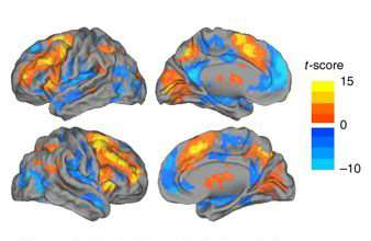 Researchers uncover hidden brain states that regulate performance and decision making