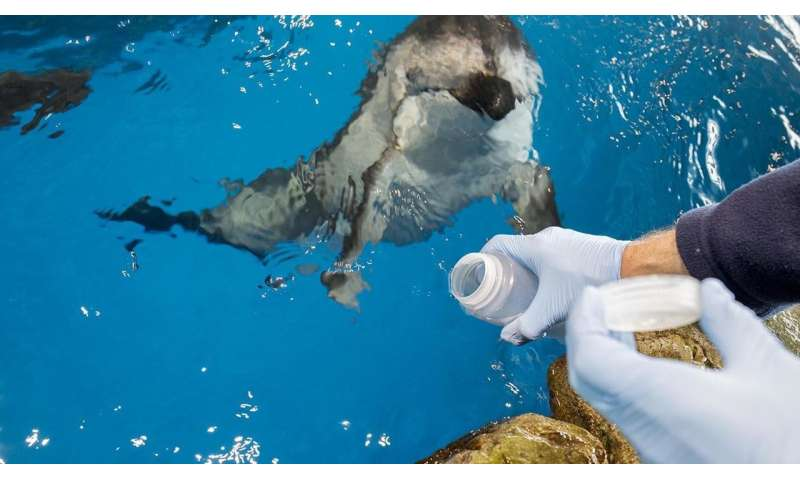 Researchers study how environment affects dolphin microbiomes at Shedd Aquarium