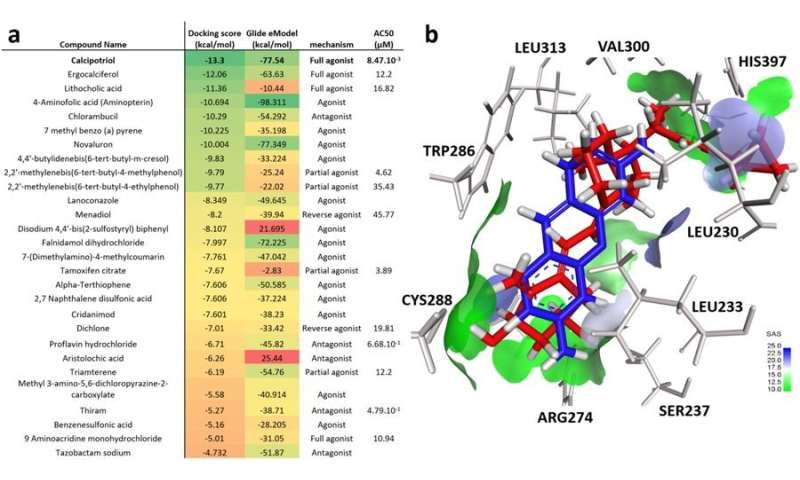 Researchers find vitamin D receptor is target for disruption by environmental chemicals