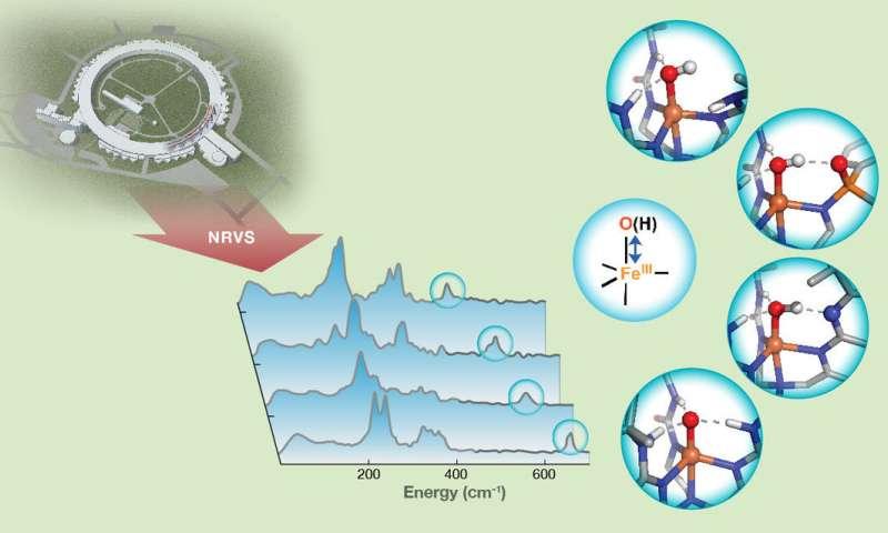 Carnegie Mellon researchers probe hydrogen bonds using new technique