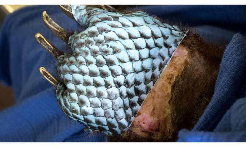Healing animals with fish skins