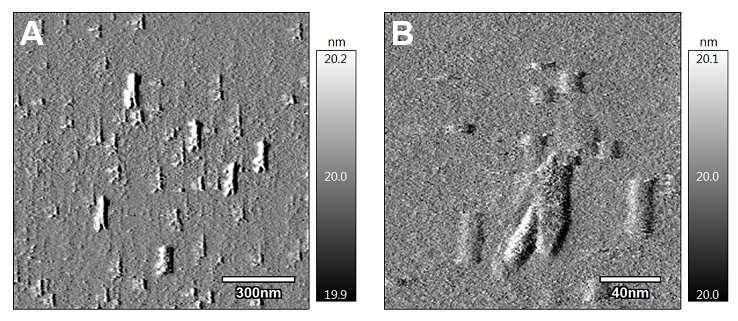 Nanoparticles improve tumor treatment in mice