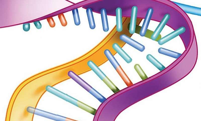 Next-generation ALS drug silences inherited form of the disease in animal models