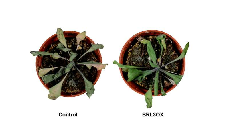 Researchers generate plants with enhanced drought resistance without penalizing growth
