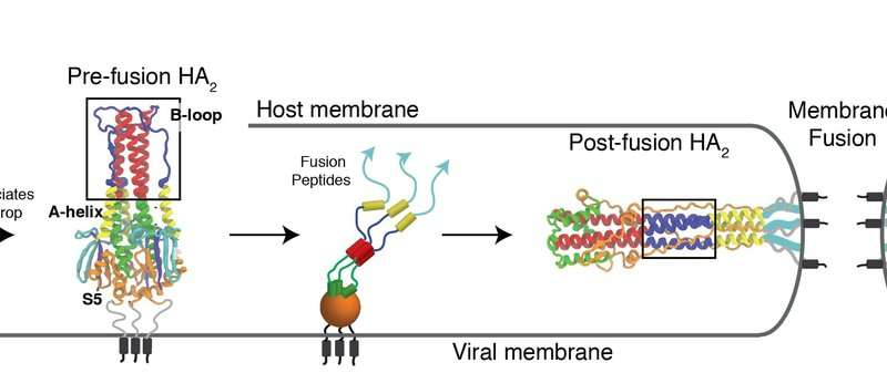 Researchers find new way to target flu virus