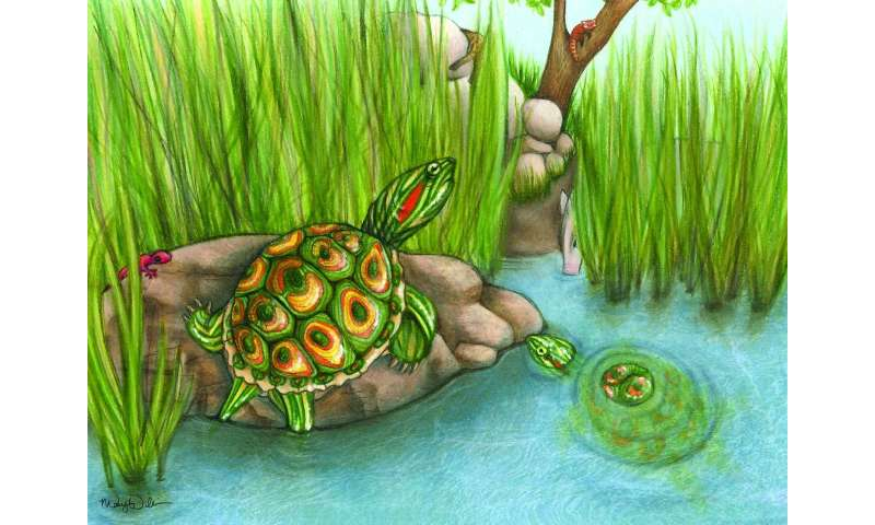 5.5 million-year-old fossil turtle species sheds light on invasive modern relatives