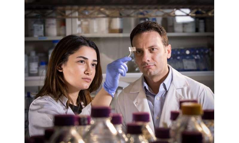 Researchers develop transparent patch to detect dangerous food threats