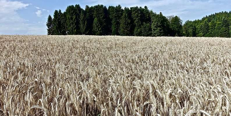 Climate change could increase arable land