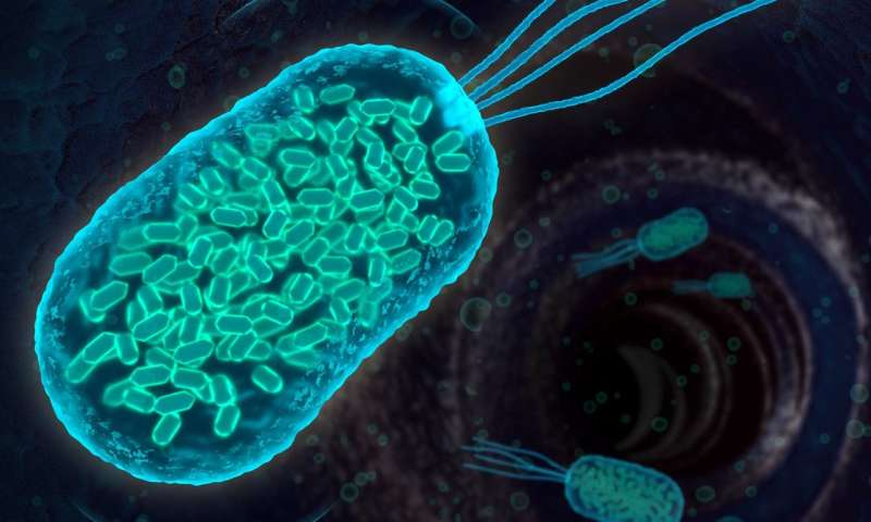 Scientists design bacteria to reflect 'sonar' signals for ultrasound imaging