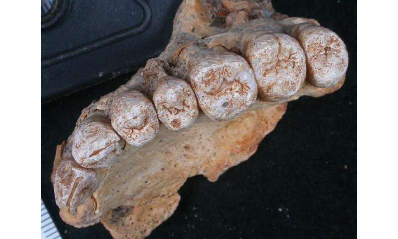 Scientists discover oldest known modern human fossil outside of Africa