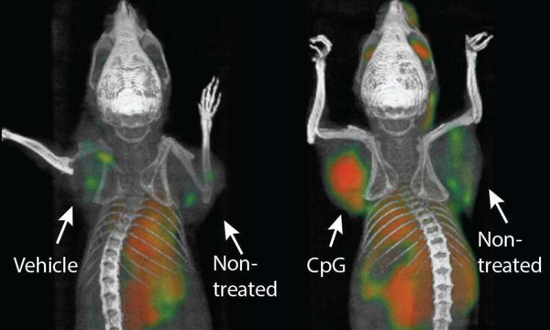 Cancer 'vaccine' eliminates tumors in mice, Stanford researchers find