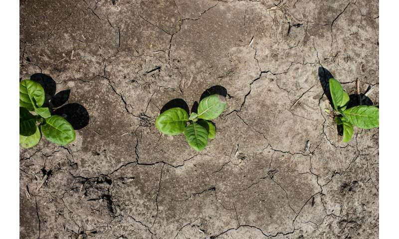 Scientists engineer crops to conserve water, resist drought