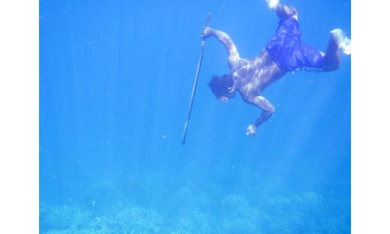 Genetic adaptations to diving discovered in humans for the first time