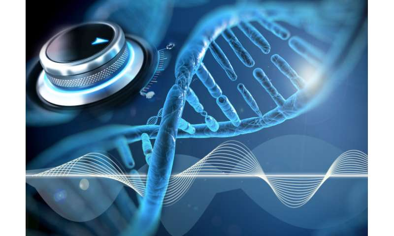 Tuneable genetic 'clocks' might lead to improved biotech strategies