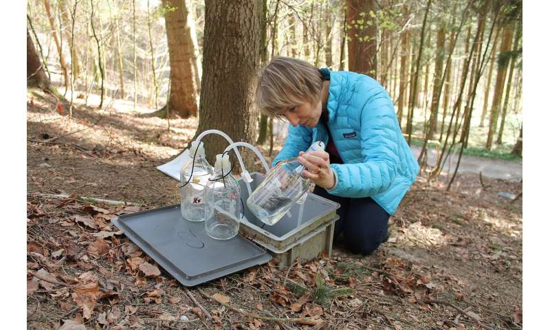 International agreements on acid rain have improved soil conditions in European forests