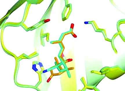 New potent analogues of plant hormone provide drought stress relief for crops
