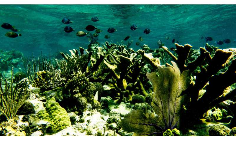Study finds marine protected areas help coral reefs
