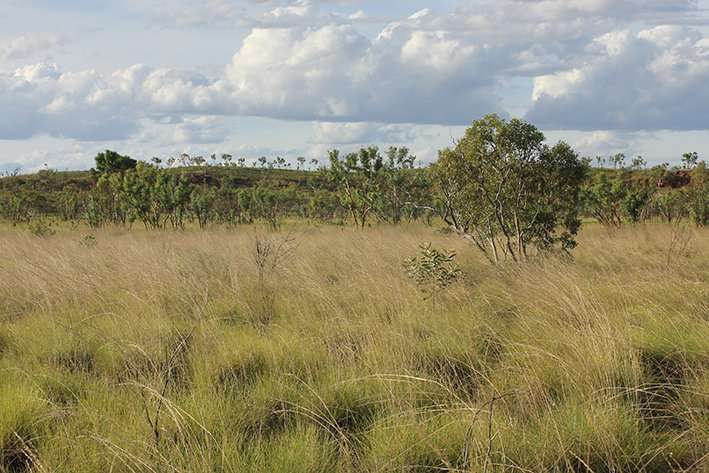 Explaining the history of Australia's vegetation