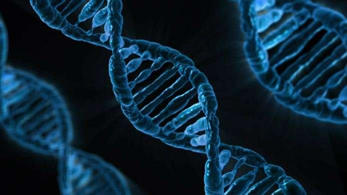 Genome editing method targets AIDS virus