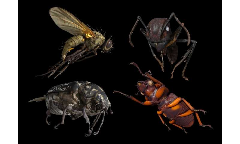 Scientists develop 3-D scanner for insects