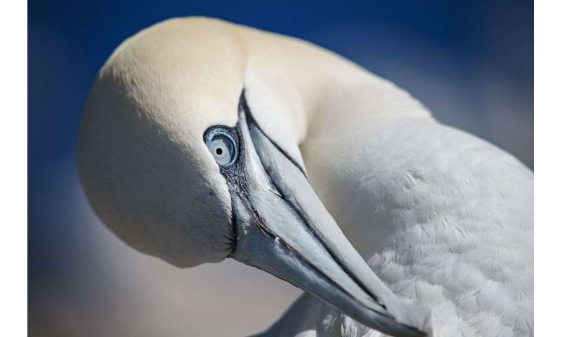 Learning good habits is secret to seabird foraging success