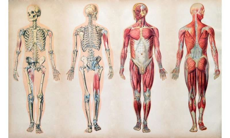 Take part in the biggest anatomy quiz in the world