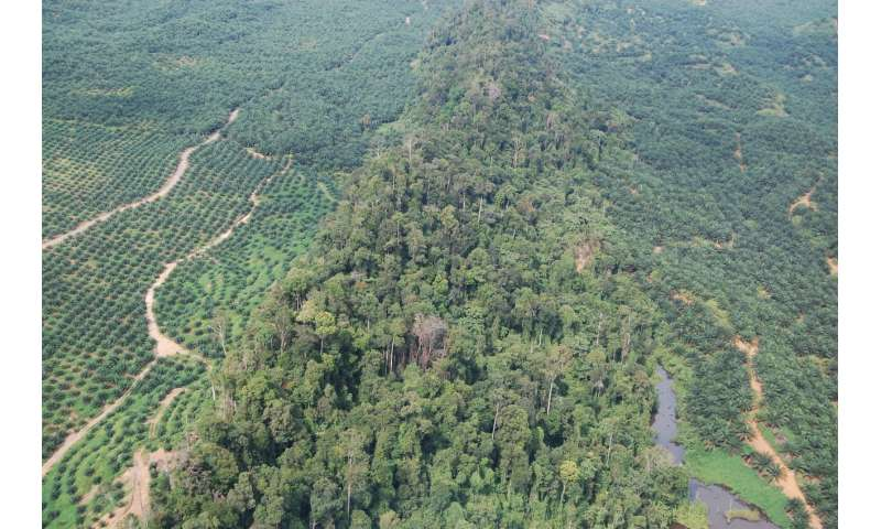 Sustainable certified palm oil scheme failing to achieve goals