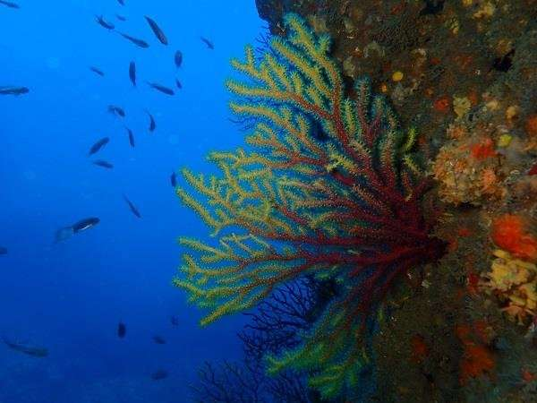Marine natural parks in Catalonia, affected by climate change