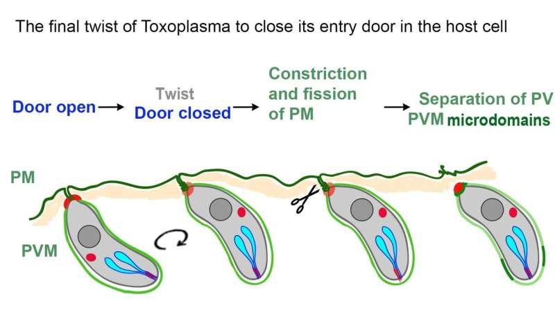 A new twist on how parasites invade host cells