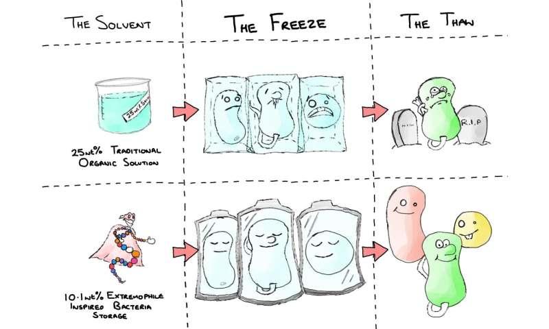 Nature's antifreeze inspires revolutionary bacteria cryopreservation technique