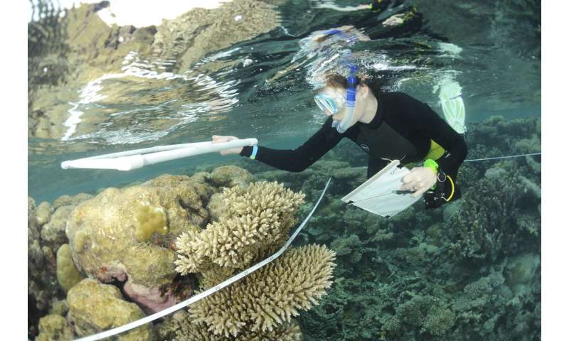 Eradicate rats to bolster coral reefs