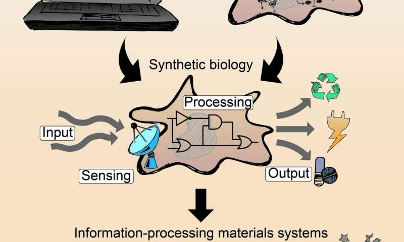Biological signalling processes in intelligent materials