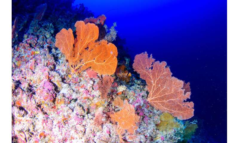 Deep-diving scientists say shallow reefs can't rely on twilight zone systems for recovery