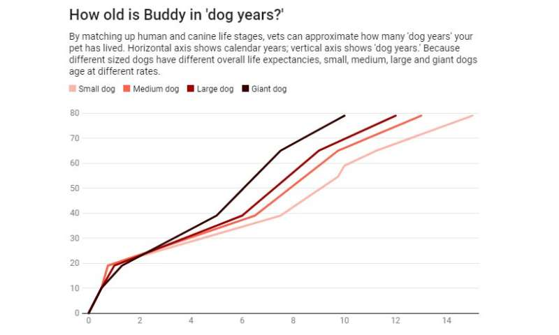 How old is my pet in dog years or cat years? A veterinarian explains