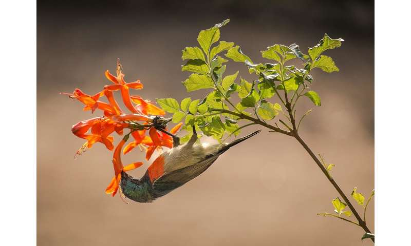 Animals and plants jointly coexist
