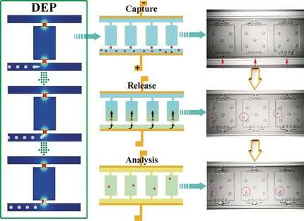 Microfluidic chip for analysis of single cells