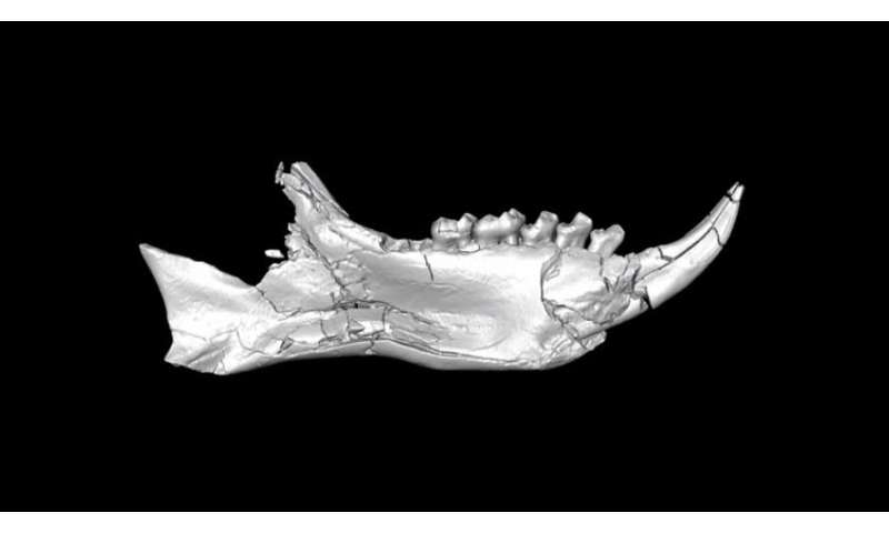 Enigmatic African fossils rewrite story of when lemurs got to Madagascar