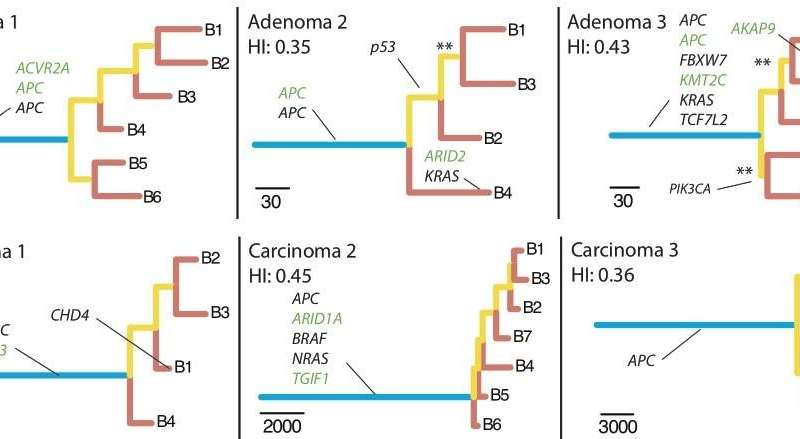 'Chromosomal catastrophes' in colorectal cancer
