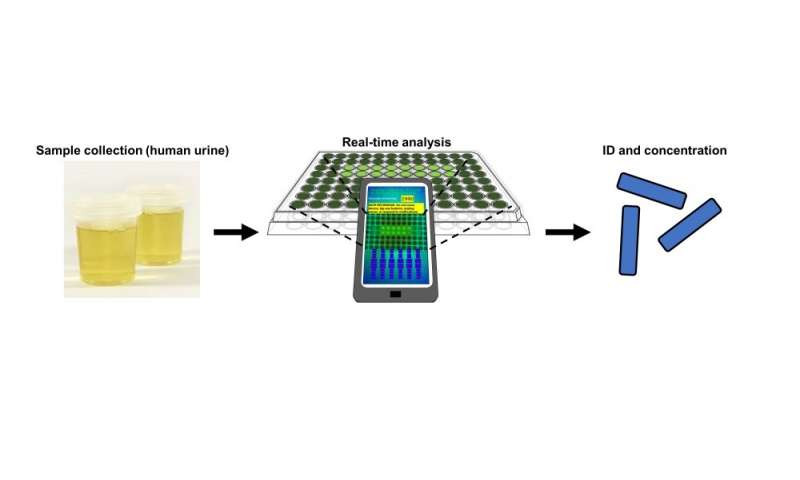 A new app enables a smartphone to ID bacteria in just one hour
