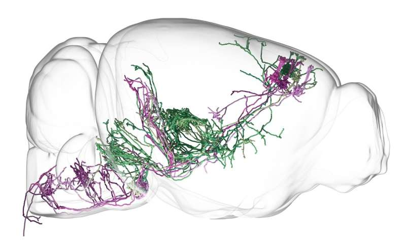 Decoding how brain circuits control behavior