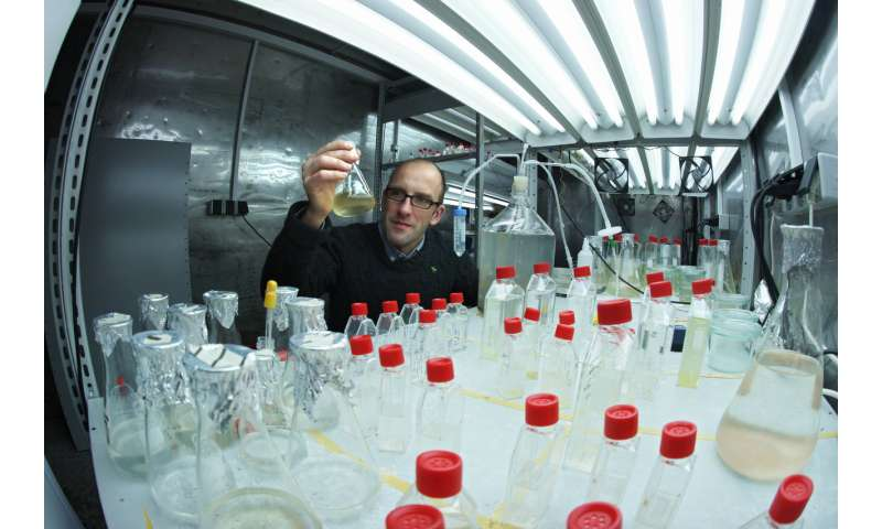 **Chemists discover previously unknown metabolic pathway in plankton