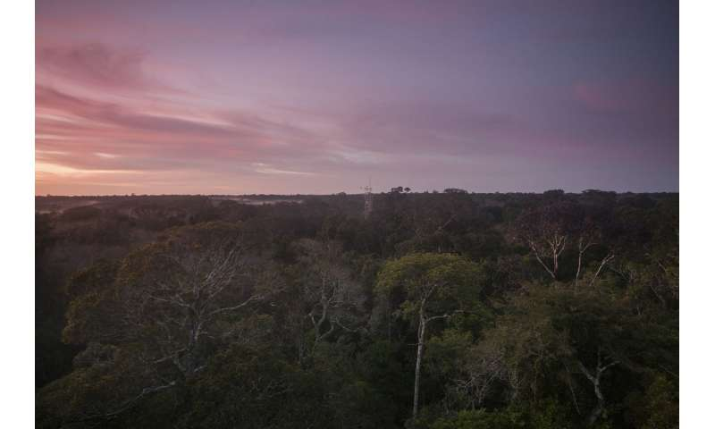 Analysis suggests economic losses due to Amazonian dieback more than mitigation efforts