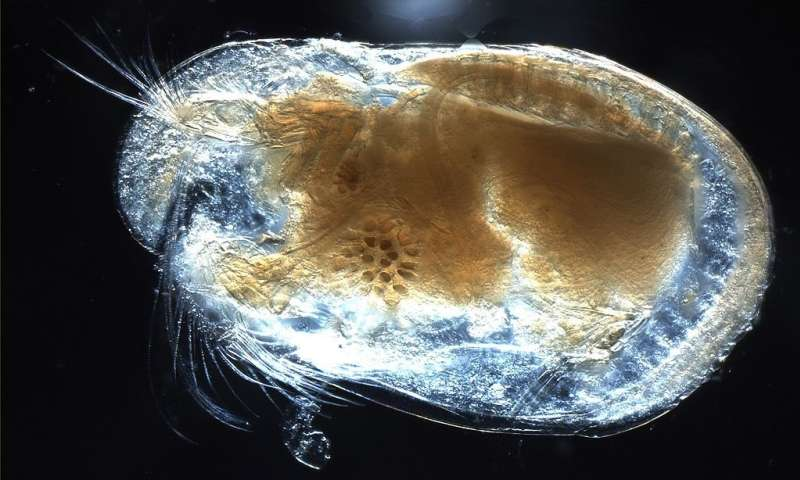 Tiny, ancient fossil shows evidence of the breath of life